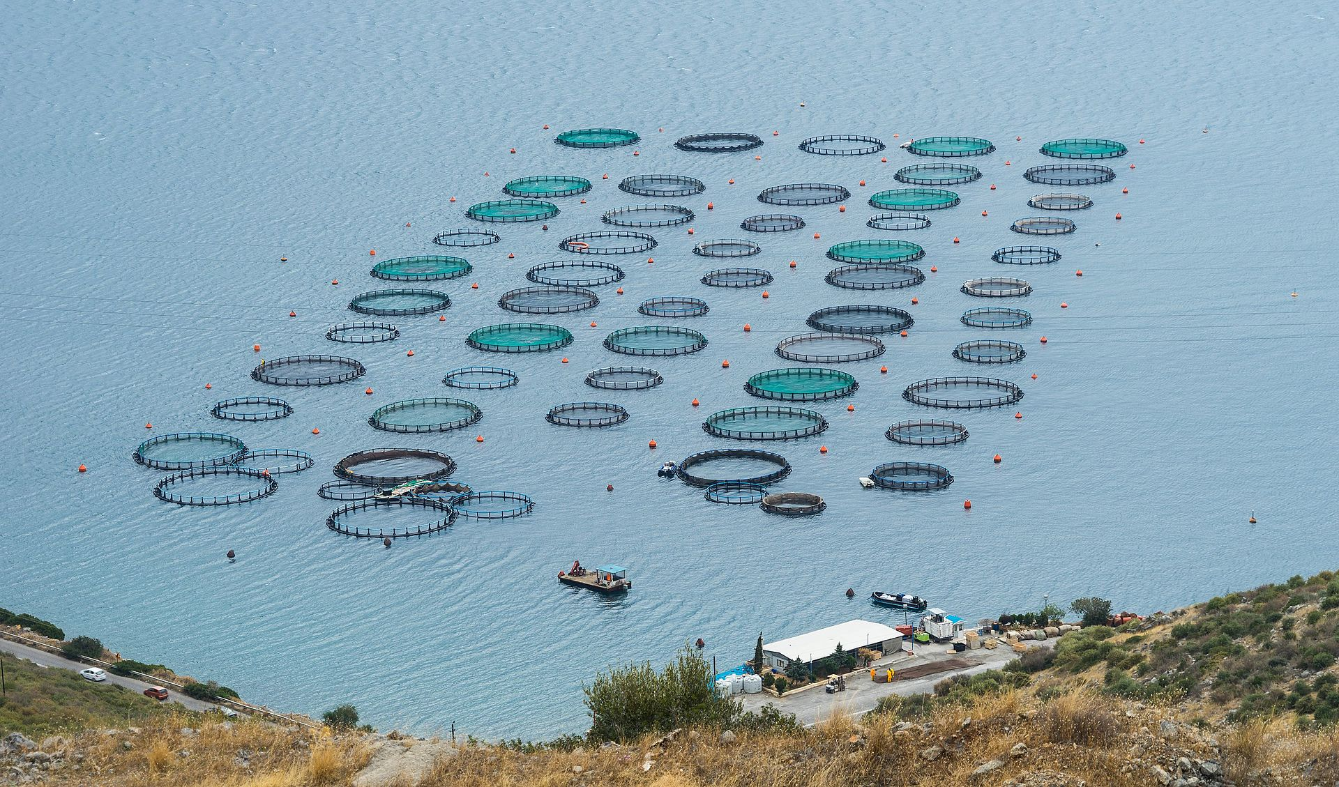 Fish farm Amarynthos Euboea Greece